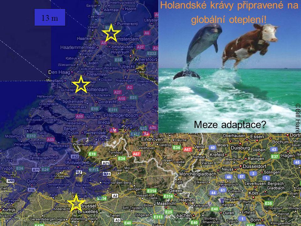13 m ©Bill Hare Meze adaptace? Holandské krávy připravené na globální oteplení!
