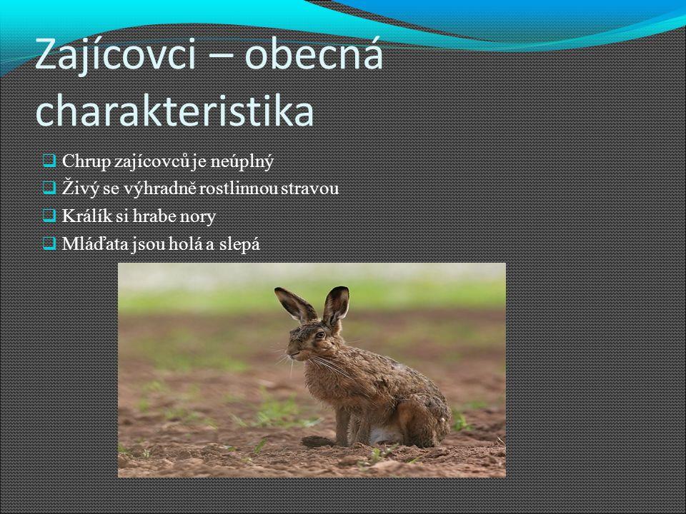 Zajícovci – obecná charakteristika  Chrup zajícovců je neúplný  Živý se výhradně rostlinnou stravou  Králík si hrabe nory  Mláďata jsou holá a slepá
