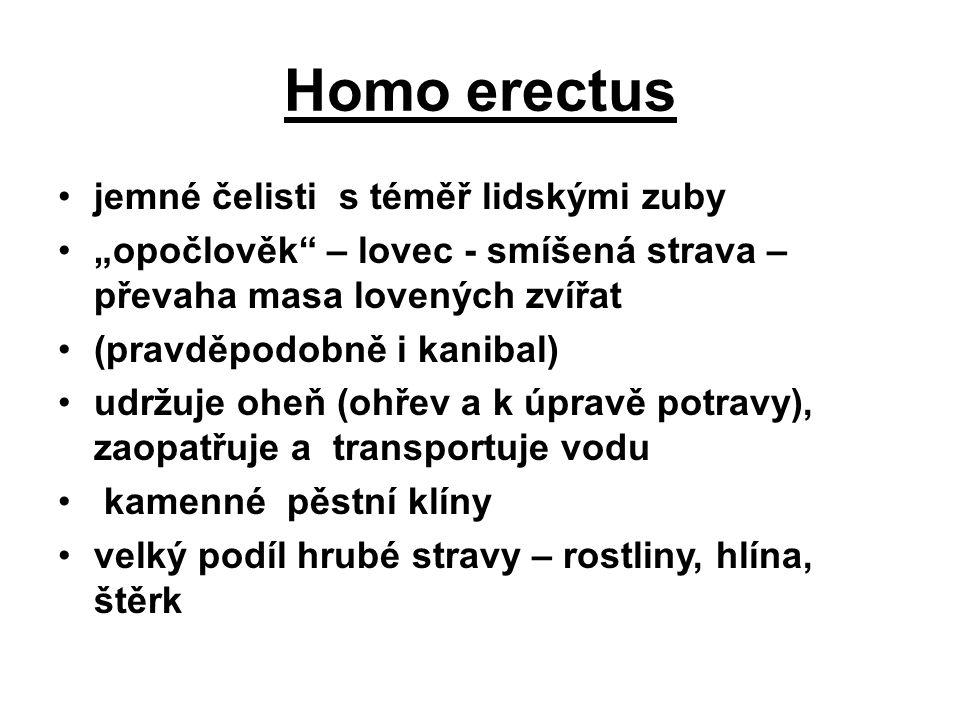 """Homo erectus jemné čelisti s téměř lidskými zuby """"opočlověk – lovec - smíšená strava – převaha masa lovených zvířat (pravděpodobně i kanibal) udržuje oheň (ohřev a k úpravě potravy), zaopatřuje a transportuje vodu kamenné pěstní klíny velký podíl hrubé stravy – rostliny, hlína, štěrk"""