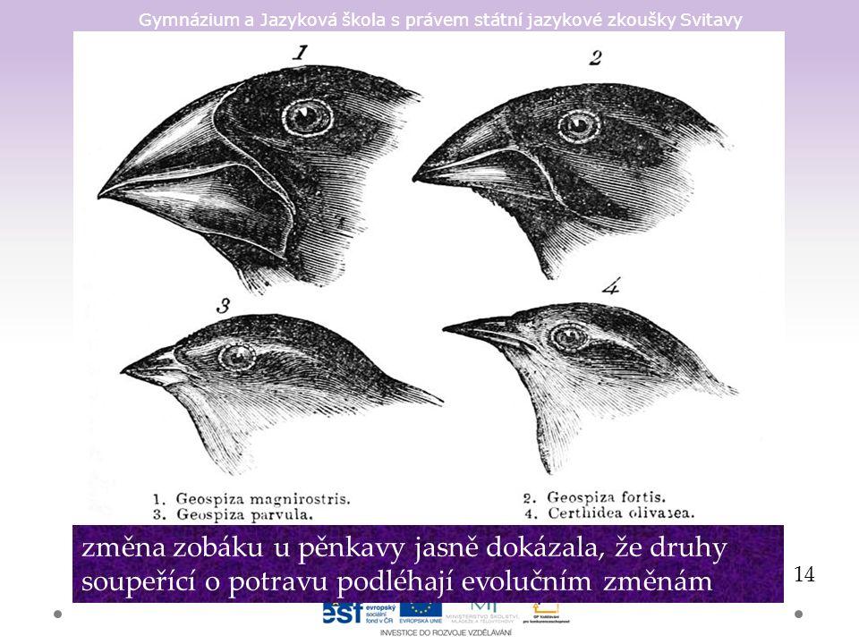 Gymnázium a Jazyková škola s právem státní jazykové zkoušky Svitavy 14 změna zobáku u pěnkavy jasně dokázala, že druhy soupeřící o potravu podléhají evolučním změnám
