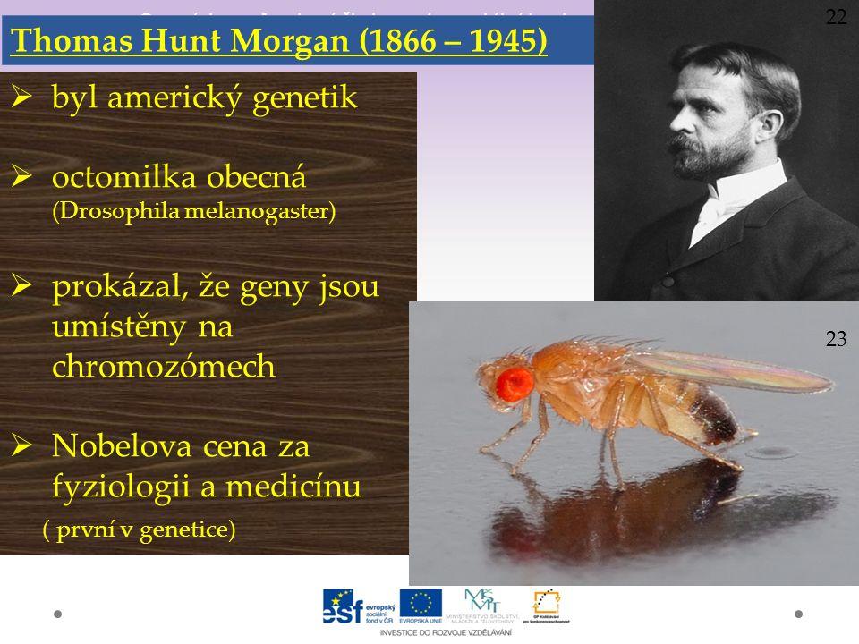 Gymnázium a Jazyková škola s právem státní jazykové zkoušky Svitavy Thomas Hunt Morgan (1866 – 1945)  byl americký genetik  octomilka obecná (Drosophila melanogaster)  prokázal, že geny jsou umístěny na chromozómech  Nobelova cena za fyziologii a medicínu ( první v genetice) 22 23