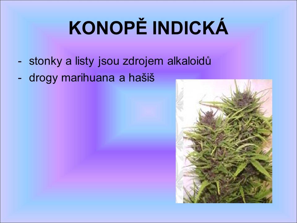 KONOPĚ INDICKÁ -stonky a listy jsou zdrojem alkaloidů -drogy marihuana a hašiš
