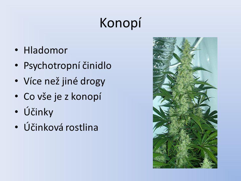 Konopí Hladomor Psychotropní činidlo Více než jiné drogy Co vše je z konopí Účinky Účinková rostlina