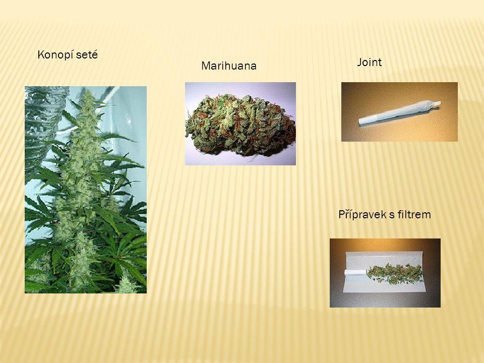 Konopí seté Marihuana Joint Přípravek s filtrem