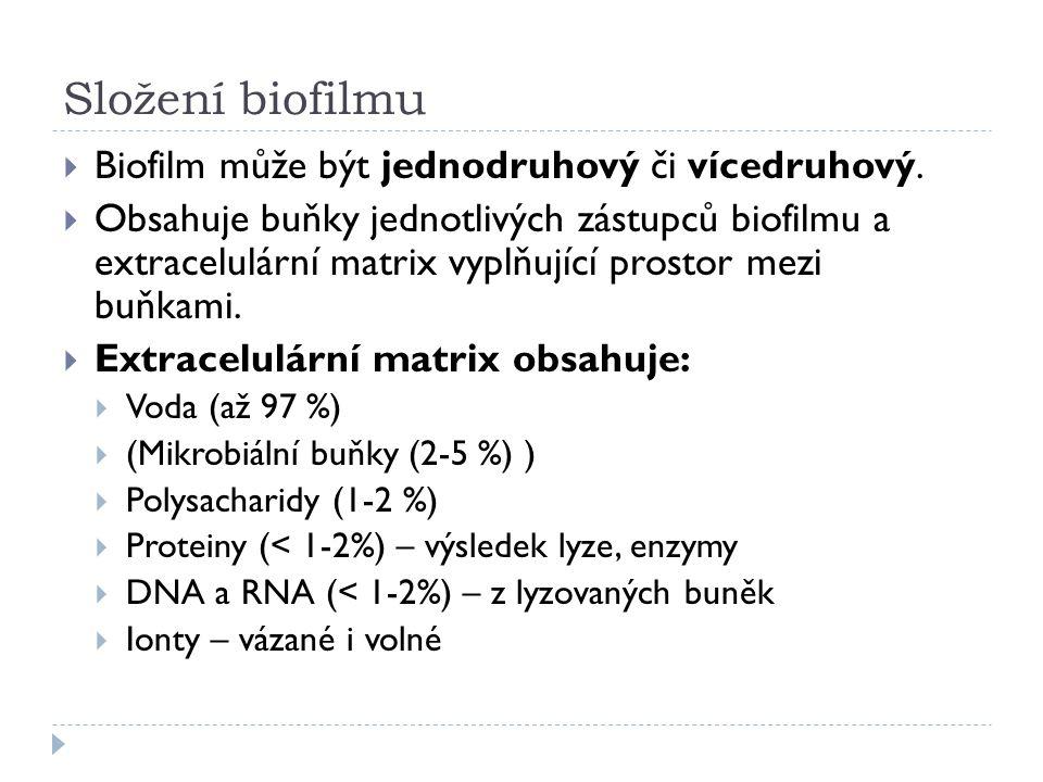 Složení biofilmu  Biofilm může být jednodruhový či vícedruhový.  Obsahuje buňky jednotlivých zástupců biofilmu a extracelulární matrix vyplňující pr