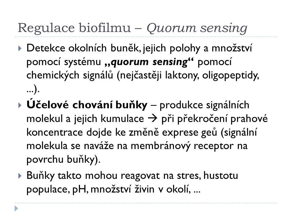 """Regulace biofilmu – Quorum sensing  Detekce okolních buněk, jejich polohy a množství pomocí systému """"quorum sensing pomocí chemických signálů (nejčastěji laktony, oligopeptidy,...)."""