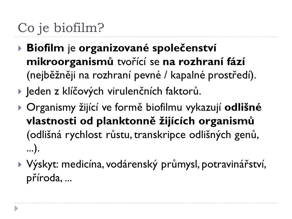 Co je biofilm?  Biofilm je organizované společenství mikroorganismů tvořící se na rozhraní fází (nejběžněji na rozhraní pevné / kapalné prostředí). 