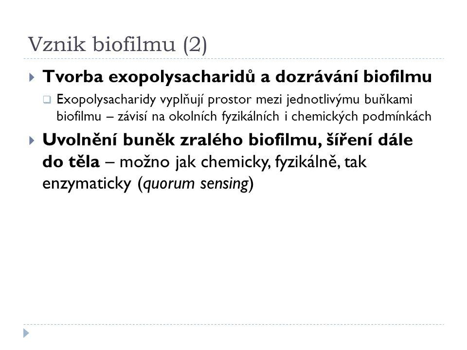 Vznik biofilmu (2)  Tvorba exopolysacharidů a dozrávání biofilmu  Exopolysacharidy vyplňují prostor mezi jednotlivýmu buňkami biofilmu – závisí na okolních fyzikálních i chemických podmínkách  Uvolnění buněk zralého biofilmu, šíření dále do těla – možno jak chemicky, fyzikálně, tak enzymaticky (quorum sensing)