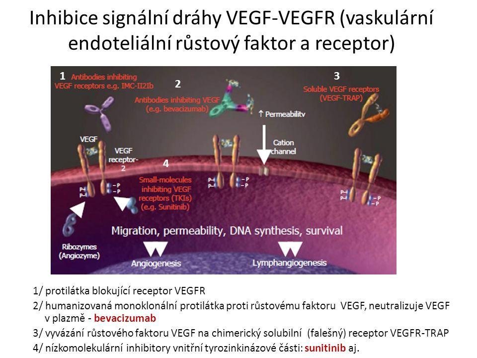 Inhibice signální dráhy VEGF-VEGFR (vaskulární endoteliální růstový faktor a receptor) 1/ protilátka blokující receptor VEGFR 2/ humanizovaná monoklonální protilátka proti růstovému faktoru VEGF, neutralizuje VEGF v plazmě - bevacizumab 3/ vyvázání růstového faktoru VEGF na chimerický solubilní (falešný) receptor VEGFR-TRAP 4/ nízkomolekulární inhibitory vnitřní tyrozinkinázové části: sunitinib aj.
