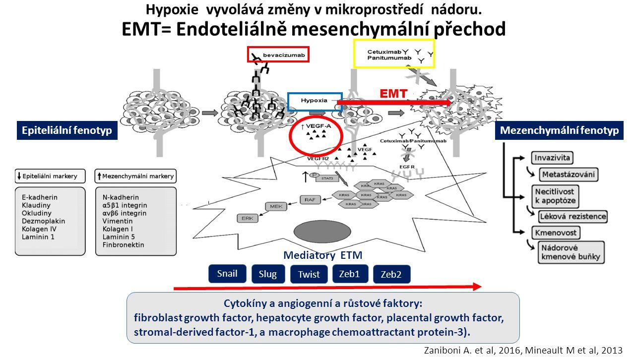 Hypoxie vyvolává změny v mikroprostředí nádoru. EMT= Endoteliálně mesenchymální přechod Zaniboni A. et al, 2016, Mineault M et al, 2013 EMT Mezenchymá