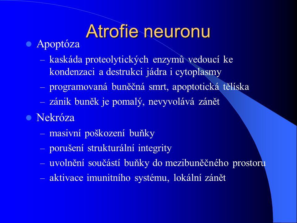 Atrofie neuronu Apoptóza – kaskáda proteolytických enzymů vedoucí ke kondenzaci a destrukci jádra i cytoplasmy – programovaná buněčná smrt, apoptotick