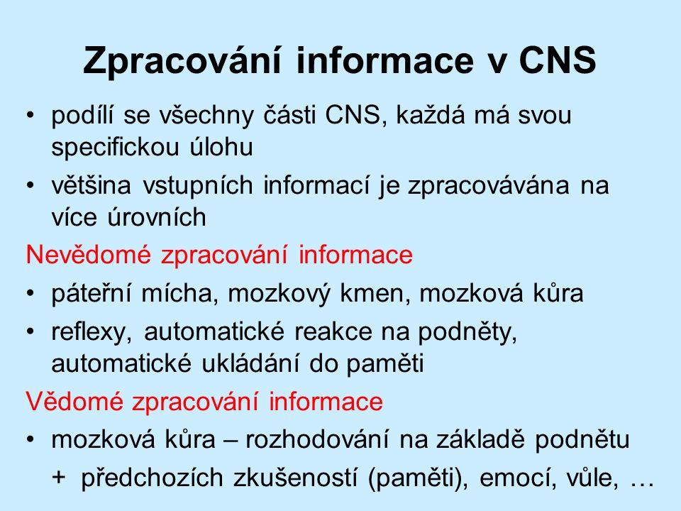 Zpracování informace v CNS podílí se všechny části CNS, každá má svou specifickou úlohu většina vstupních informací je zpracovávána na více úrovních Nevědomé zpracování informace páteřní mícha, mozkový kmen, mozková kůra reflexy, automatické reakce na podněty, automatické ukládání do paměti Vědomé zpracování informace mozková kůra – rozhodování na základě podnětu + předchozích zkušeností (paměti), emocí, vůle, …
