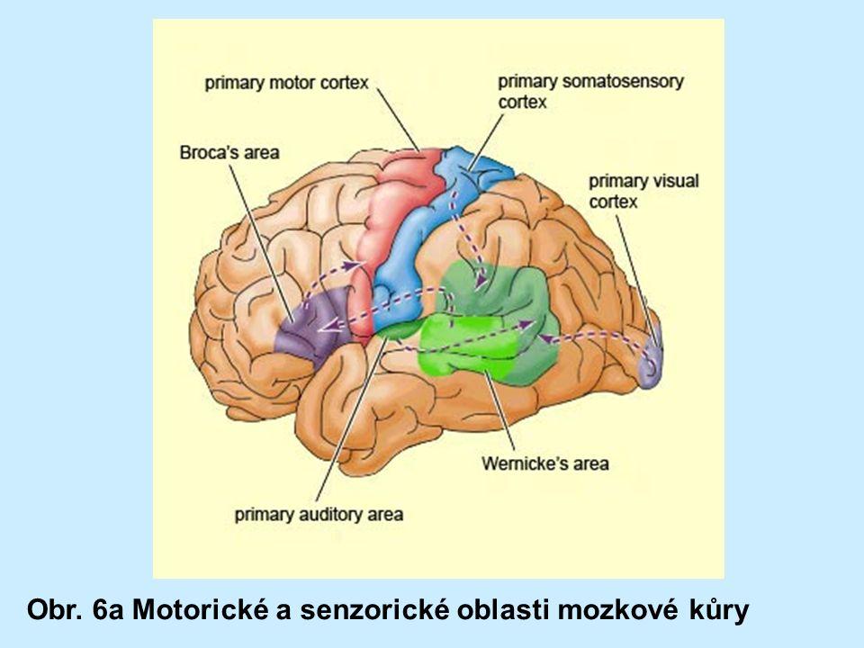 Obr. 6a Motorické a senzorické oblasti mozkové kůry