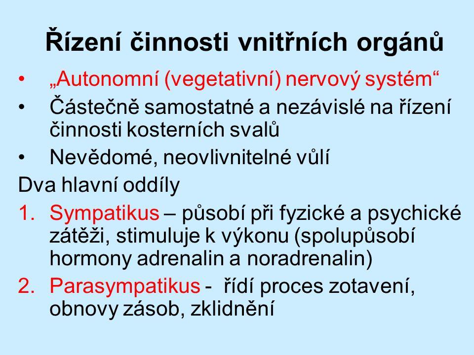 """Řízení činnosti vnitřních orgánů """"Autonomní (vegetativní) nervový systém Částečně samostatné a nezávislé na řízení činnosti kosterních svalů Nevědomé, neovlivnitelné vůlí Dva hlavní oddíly 1.Sympatikus – působí při fyzické a psychické zátěži, stimuluje k výkonu (spolupůsobí hormony adrenalin a noradrenalin) 2.Parasympatikus - řídí proces zotavení, obnovy zásob, zklidnění"""