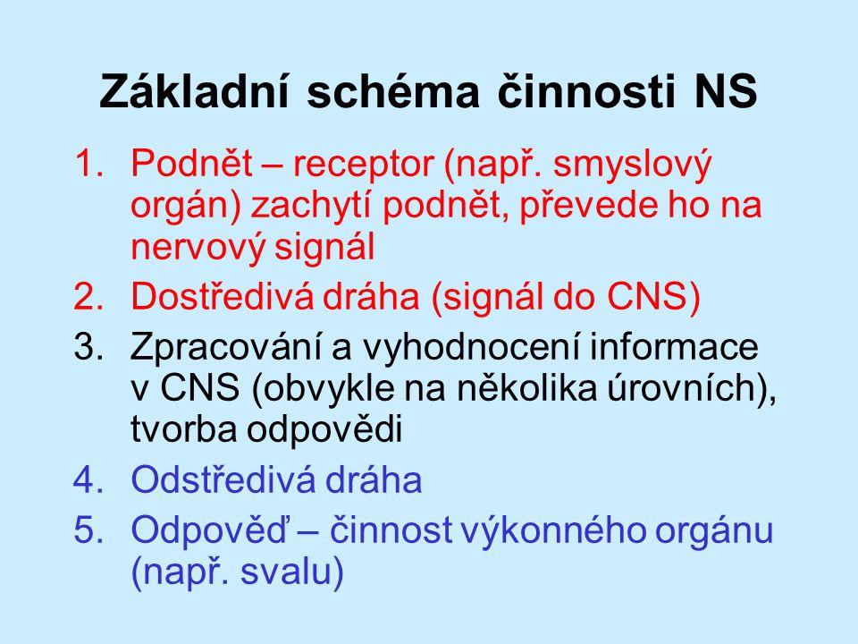 Základní schéma činnosti NS 1.Podnět – receptor (např.