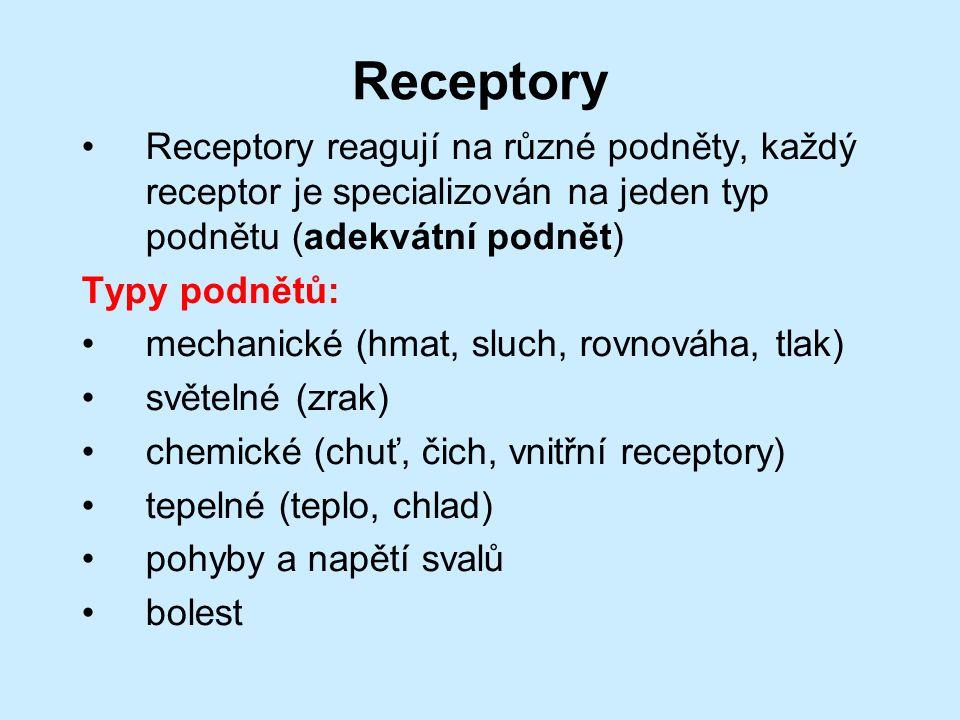 Receptory Receptory reagují na různé podněty, každý receptor je specializován na jeden typ podnětu (adekvátní podnět) Typy podnětů: mechanické (hmat, sluch, rovnováha, tlak) světelné (zrak) chemické (chuť, čich, vnitřní receptory) tepelné (teplo, chlad) pohyby a napětí svalů bolest