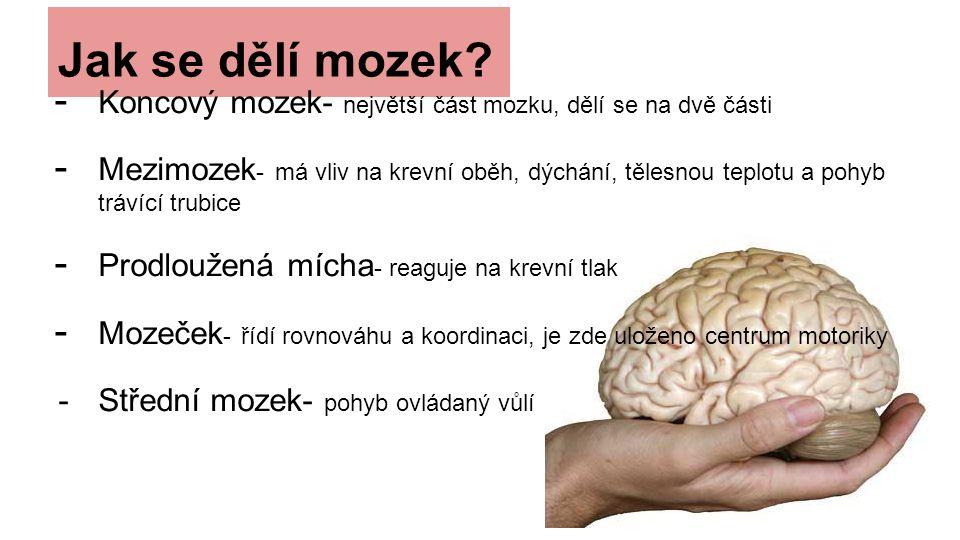 Jak se dělí mozek.