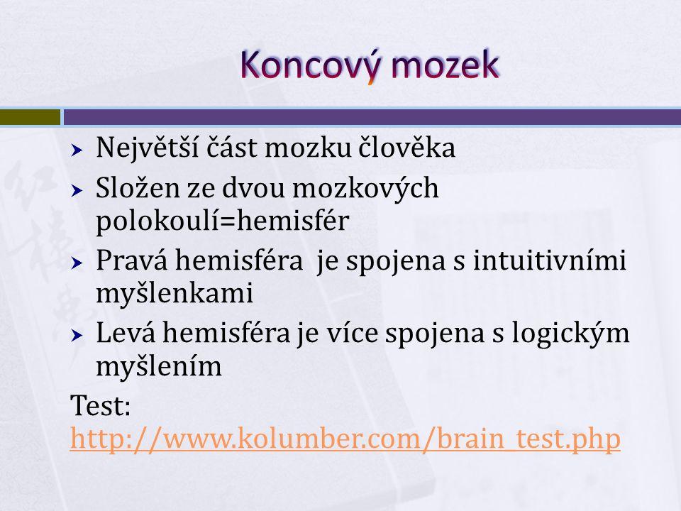  Největší část mozku člověka  Složen ze dvou mozkových polokoulí=hemisfér  Pravá hemisféra je spojena s intuitivními myšlenkami  Levá hemisféra je více spojena s logickým myšlením Test: http://www.kolumber.com/brain_test.php http://www.kolumber.com/brain_test.php