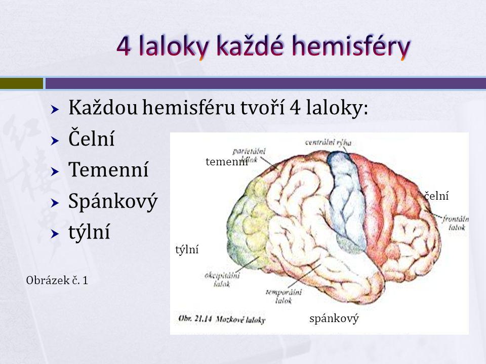  Každou hemisféru tvoří 4 laloky:  Čelní  Temenní  Spánkový  týlní spánkový čelní temenní týlní Obrázek č.