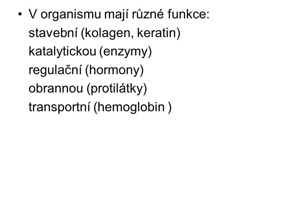 V organismu mají různé funkce: stavební (kolagen, keratin) katalytickou (enzymy) regulační (hormony) obrannou (protilátky) transportní (hemoglobin )