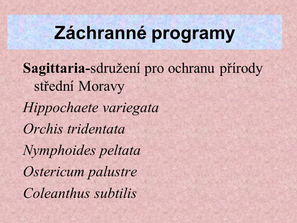 Záchranné programy Sagittaria-sdružení pro ochranu přírody střední Moravy Hippochaete variegata Orchis tridentata Nymphoides peltata Ostericum palustre Coleanthus subtilis