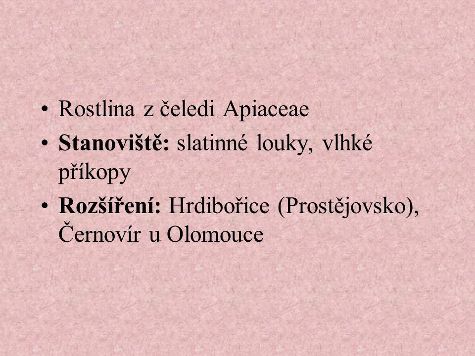 Rostlina z čeledi Apiaceae Stanoviště: slatinné louky, vlhké příkopy Rozšíření: Hrdibořice (Prostějovsko), Černovír u Olomouce