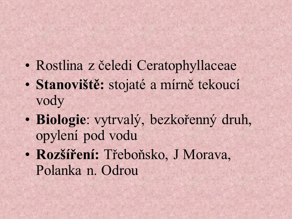 Rostlina z čeledi Ceratophyllaceae Stanoviště: stojaté a mírně tekoucí vody Biologie: vytrvalý, bezkořenný druh, opylení pod vodu Rozšíření: Třeboňsko, J Morava, Polanka n.