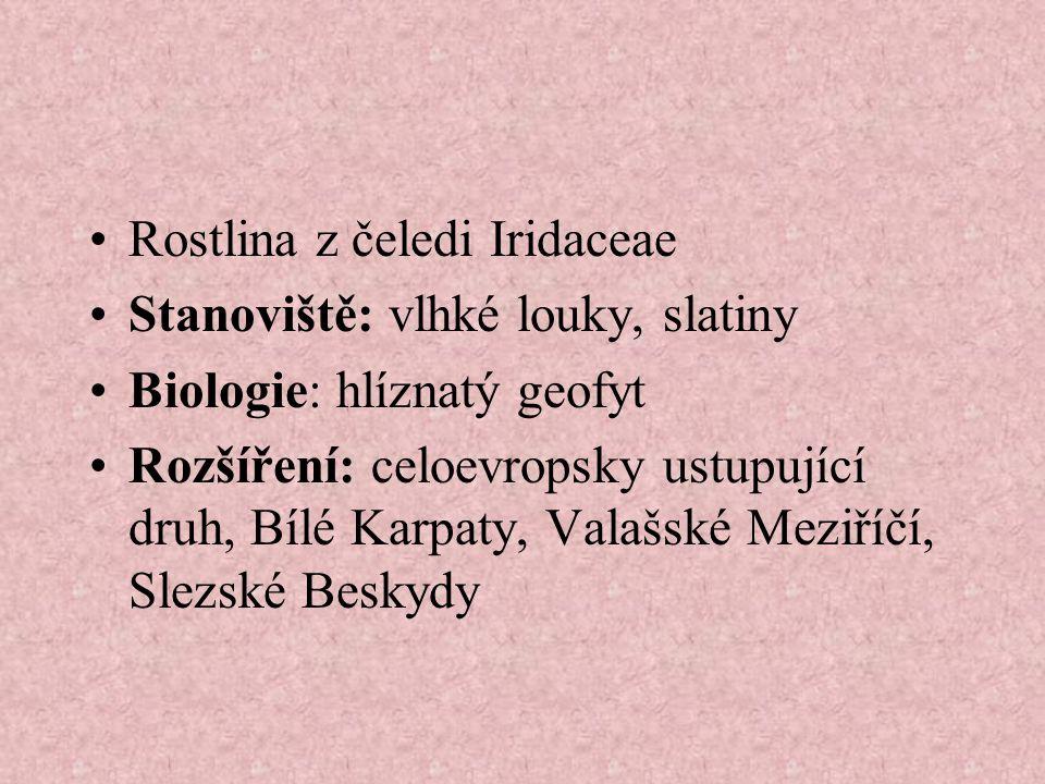 Rostlina z čeledi Iridaceae Stanoviště: vlhké louky, slatiny Biologie: hlíznatý geofyt Rozšíření: celoevropsky ustupující druh, Bílé Karpaty, Valašské Meziříčí, Slezské Beskydy