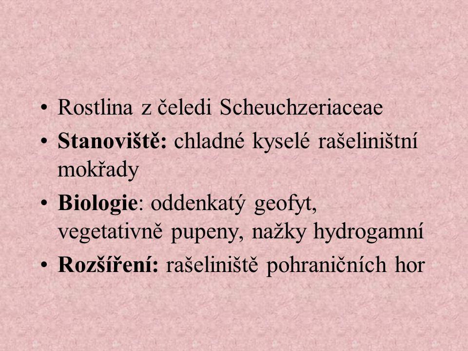 Rostlina z čeledi Scheuchzeriaceae Stanoviště: chladné kyselé rašeliništní mokřady Biologie: oddenkatý geofyt, vegetativně pupeny, nažky hydrogamní Rozšíření: rašeliniště pohraničních hor