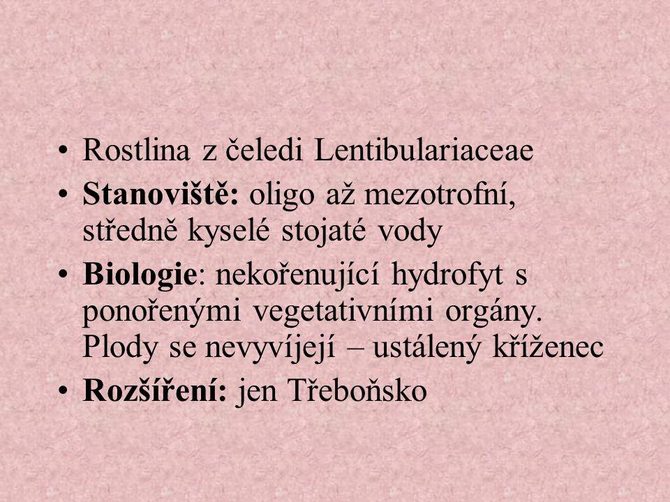 Rostlina z čeledi Lentibulariaceae Stanoviště: oligo až mezotrofní, středně kyselé stojaté vody Biologie: nekořenující hydrofyt s ponořenými vegetativními orgány.