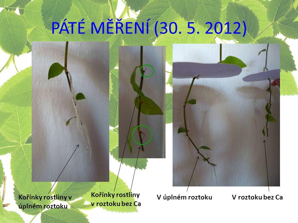 Kořínky rostliny v úplném roztoku V úplném roztokuV roztoku bez Ca Kořínky rostliny v roztoku bez Ca