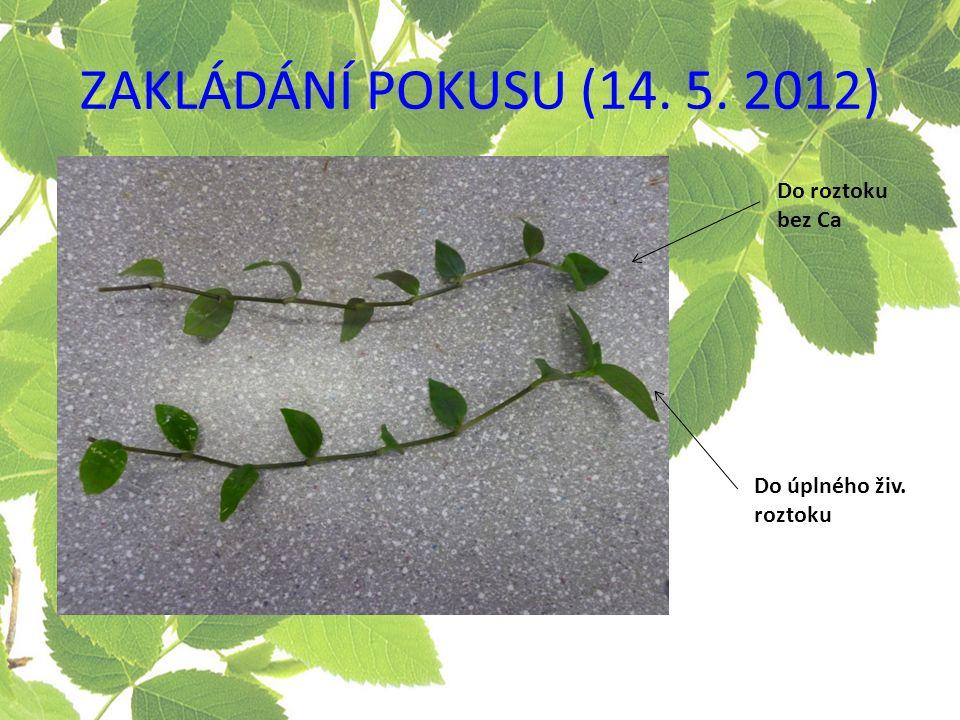ZAKLÁDÁNÍ POKUSU (14. 5. 2012) Do roztoku bez Ca Do úplného živ. roztoku