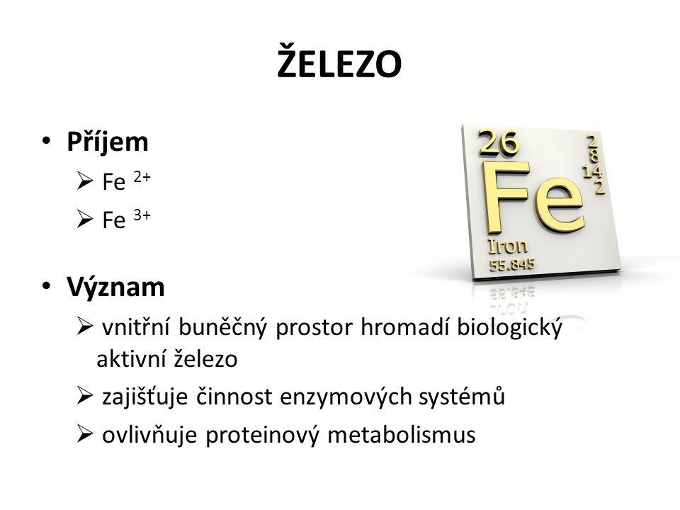 ŽELEZO Příjem  Fe 2+  Fe 3+ Význam  vnitřní buněčný prostor hromadí biologický aktivní železo  zajišťuje činnost enzymových systémů  ovlivňuje proteinový metabolismus