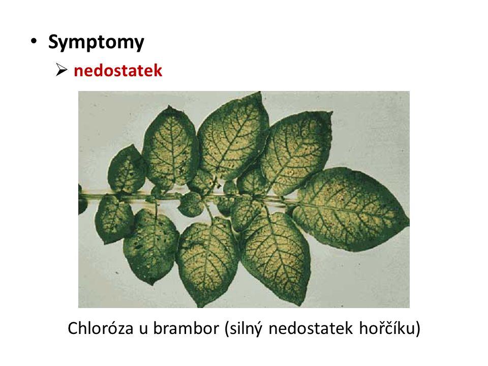 Symptomy  nedostatek Chloróza u brambor (silný nedostatek hořčíku)