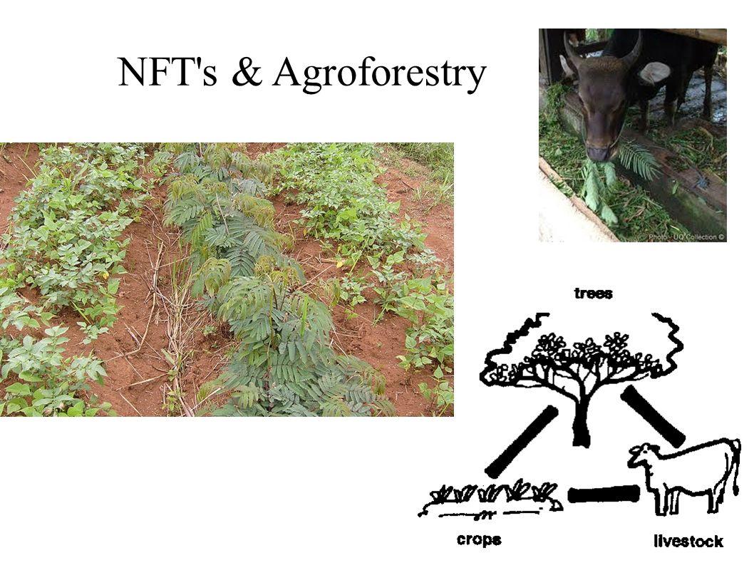 NFT s & Agroforestry