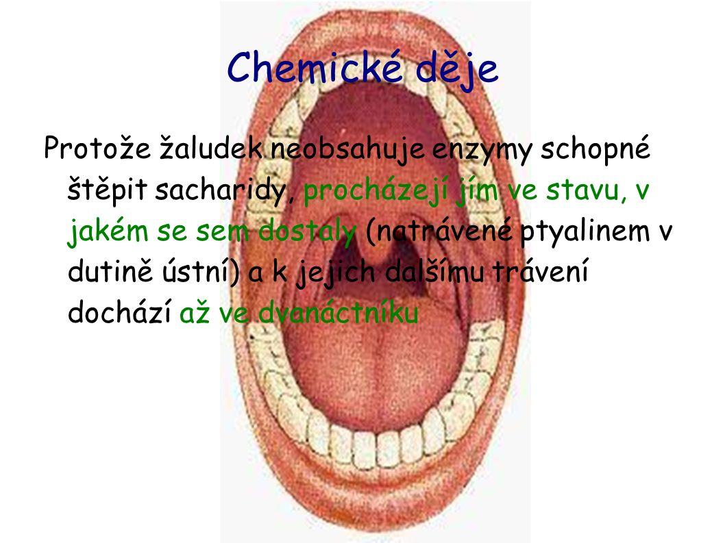 Chemické děje Protože žaludek neobsahuje enzymy schopné štěpit sacharidy, procházejí jím ve stavu, v jakém se sem dostaly (natrávené ptyalinem v dutině ústní) a k jejich dalšímu trávení dochází až ve dvanáctníku