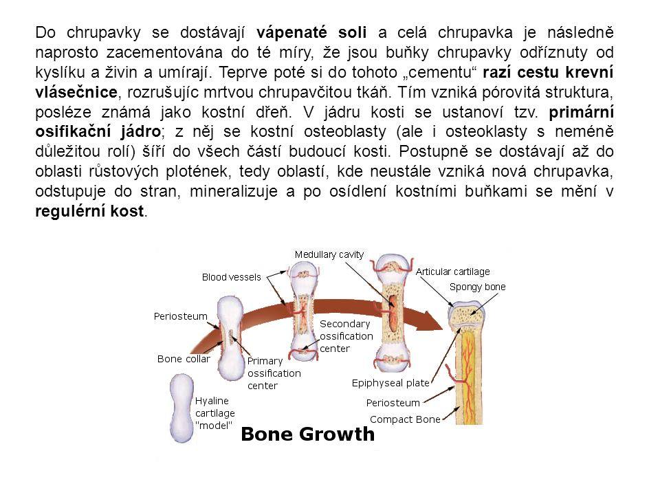 Do chrupavky se dostávají vápenaté soli a celá chrupavka je následně naprosto zacementována do té míry, že jsou buňky chrupavky odříznuty od kyslíku a živin a umírají.