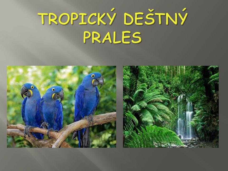 Tropický deštný prales je zalesněný biom s trvale teplým a vlhkým podnebím.