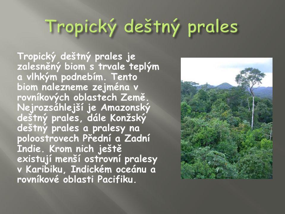 Tropický deštný prales je biom s největším počtem druhů organismů, většina z nich je nejspíše dosud nepoznána.