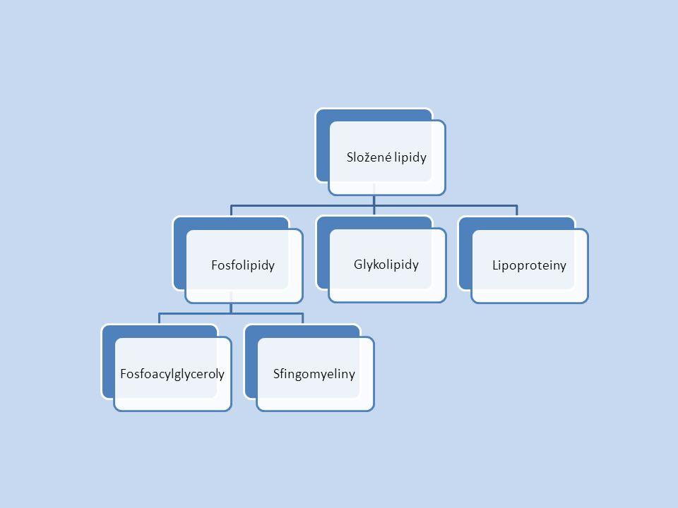 Složené lipidyFosfolipidyFosfoacylglycerolySfingomyelinyGlykolipidyLipoproteiny