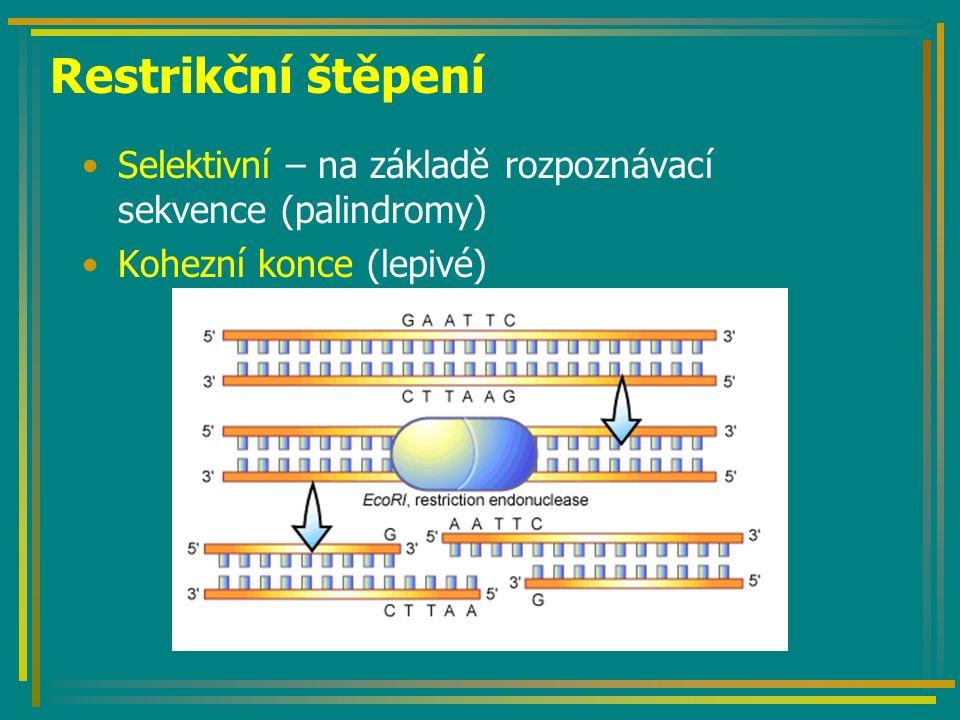 DNA ligázy Enzymy, vytvářející vazbu mezi 5´fosfátem a 3´OH- zbytkem volných konců molekul DNA