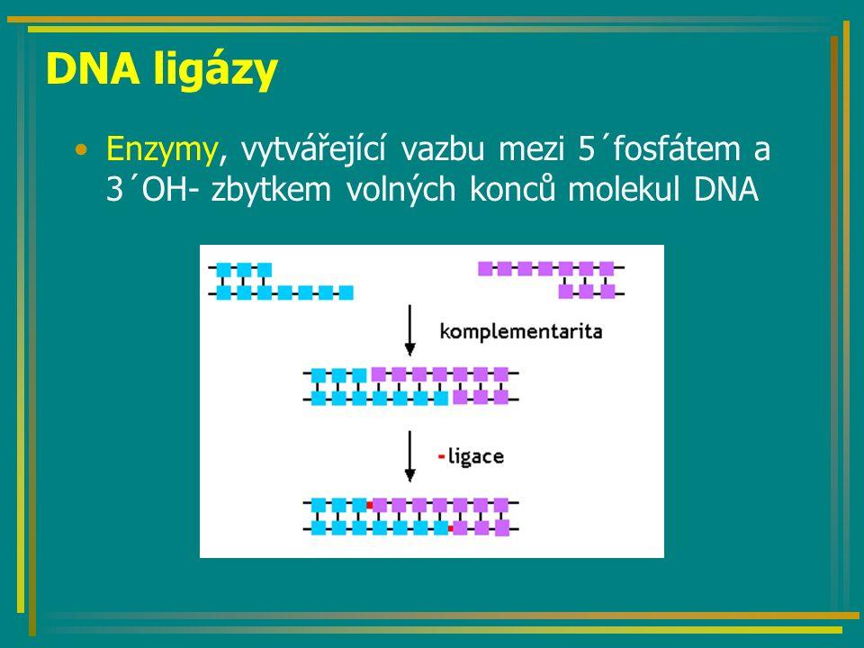 Terminátorové rostliny http://www.adonline.id.au/terminator/intro.shtml Aktivace systému tetracyklinem