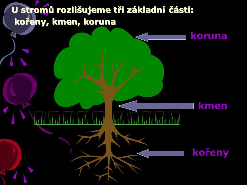 U stromů rozlišujeme tři základní části: kořeny, kmen, koruna kořeny, kmen, koruna kořeny kmen koruna