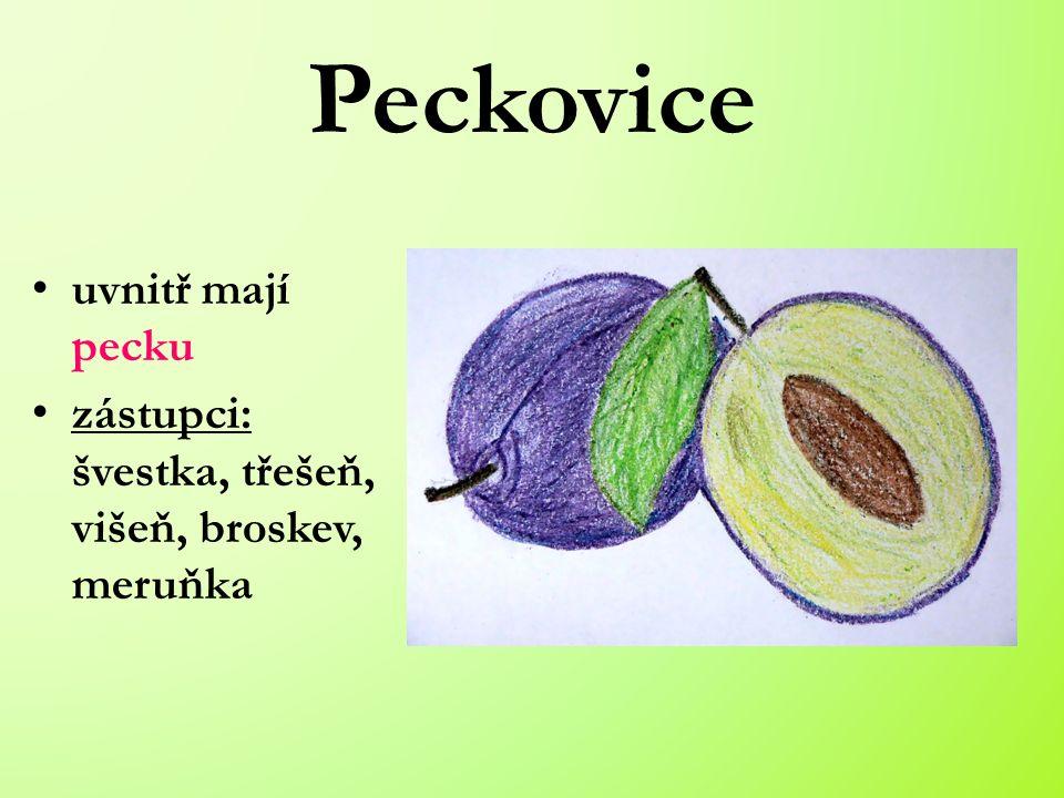 Peckovice uvnitř mají pecku zástupci: švestka, třešeň, višeň, broskev, meruňka