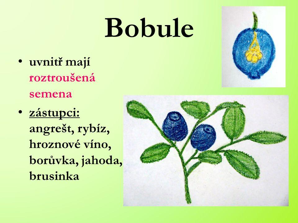Bobule uvnitř mají roztroušená semena zástupci: angrešt, rybíz, hroznové víno, borůvka, jahoda, brusinka