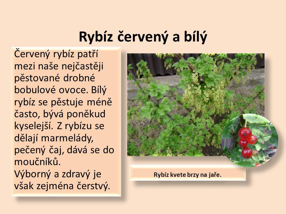 Mezi nejznámější u nás pěstované ovocné keře a drobné ovoce patří: Rybíz červený a bílý Rybíz černý Angrešt Maliník Ostružiník Jahodník Borůvka Vinná réva Rybíz červený a bílý Rybíz černý Angrešt Maliník Ostružiník Jahodník Borůvka Vinná réva