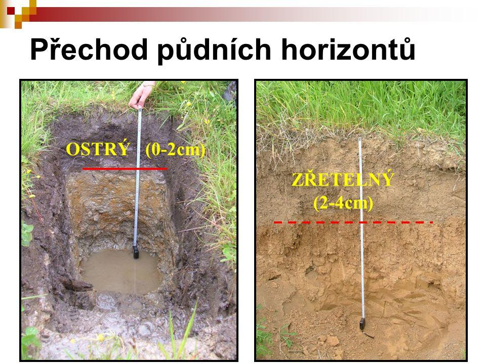 Přechod půdních horizontů ZŘETELNÝ (2-4cm) OSTRÝ (0-2cm)