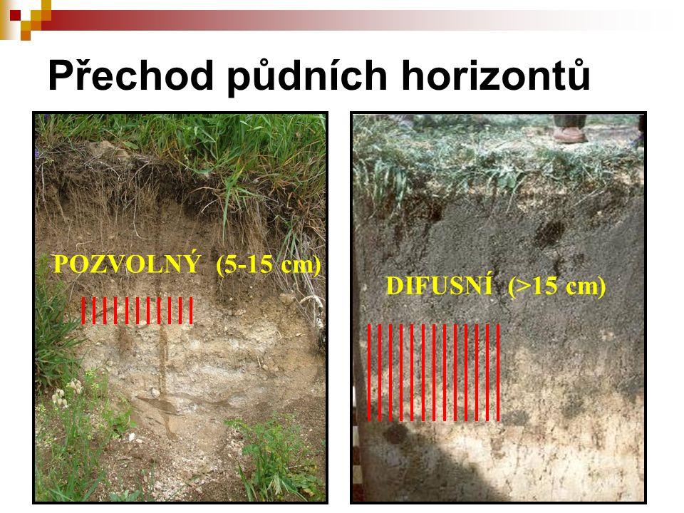 Přechod půdních horizontů POZVOLNÝ (5-15 cm) DIFUSNÍ (>15 cm)