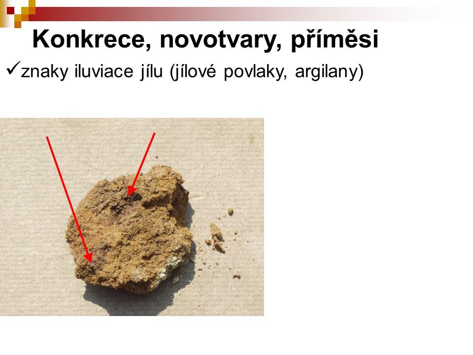 znaky iluviace jílu (jílové povlaky, argilany) Konkrece, novotvary, příměsi