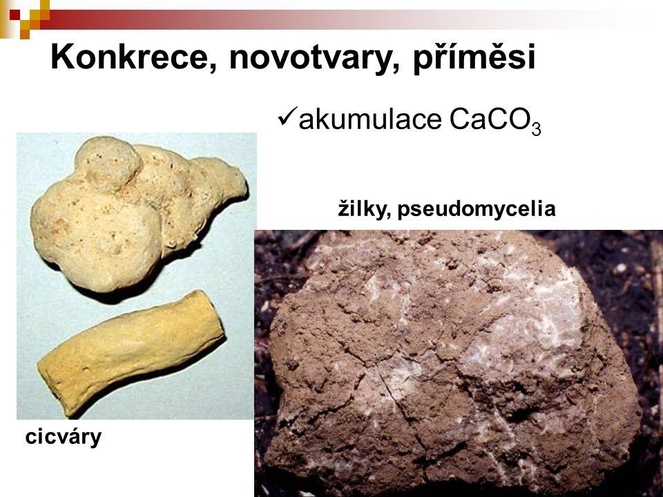 akumulace CaCO 3 Konkrece, novotvary, příměsi cicváry žilky, pseudomycelia